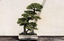 'LEGO 10281 Bonsai Tree verschijnt op 1 januari 2021'