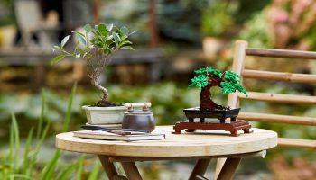 LEGO 10281 Bonsaiboompje in de aanbieding bij Amazon: €34,99